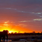 Silhouette of an elephant bull at sunrise