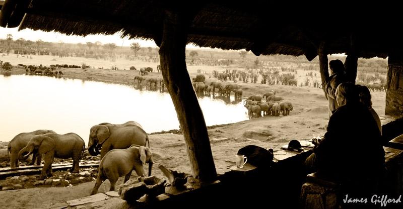 Elephant and buffalo at Masuma Dam - Hwange