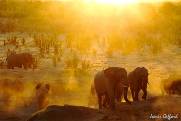 Sundowners in Hwange National Park