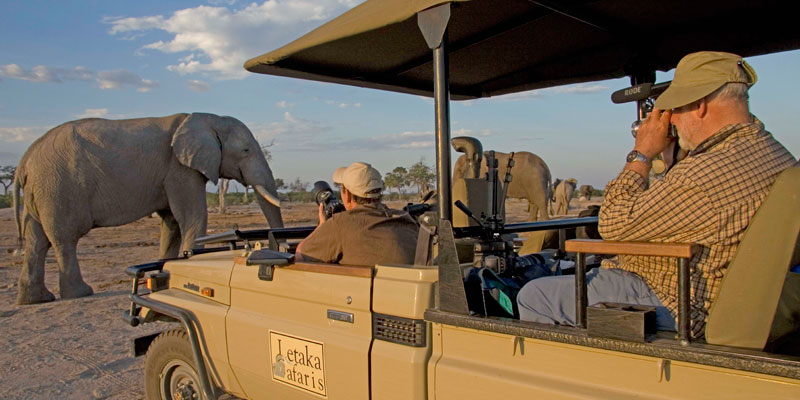Elephants in Savuti – Chobe National Park
